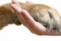 Spašeni psi poplavljene Slavonije su gladni