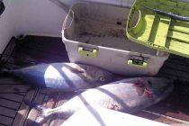 Klupsko natjecanje u športskom ribolovu na moru ŠD Lignje