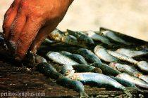 Ribarska večer i primoštenski ljetni karneval