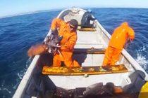 VIDEO: E ovo je lov na lignje, pardon, lignjetine