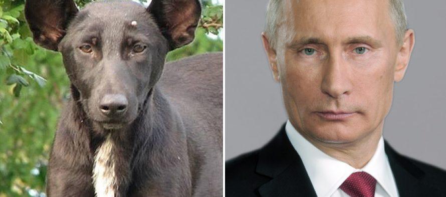 ZANIMLJIVOSTI: Psi i njihovi dvojnici