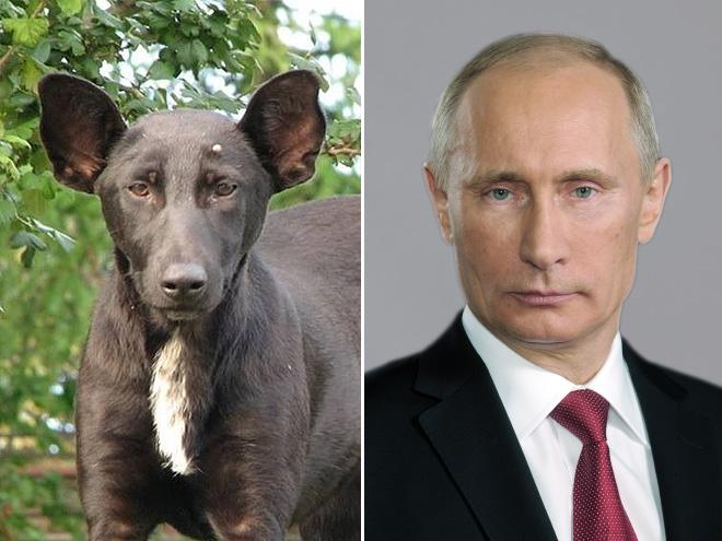 psi dvojnici_3