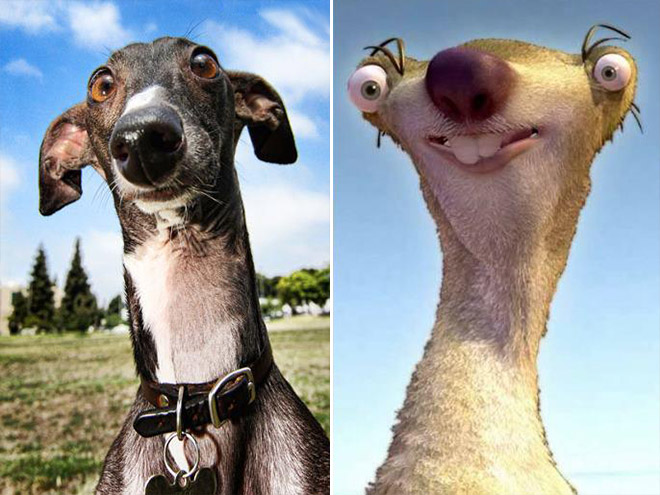 psi dvojnici_6