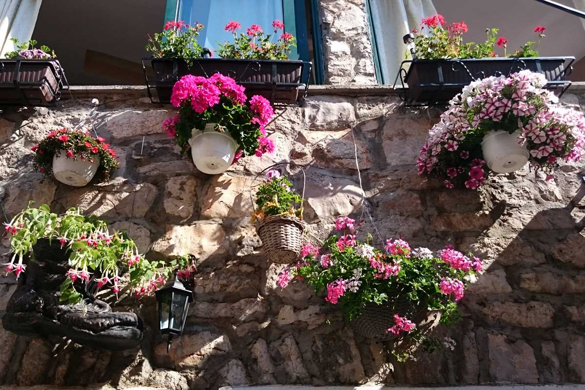 Cvijeće Primošten