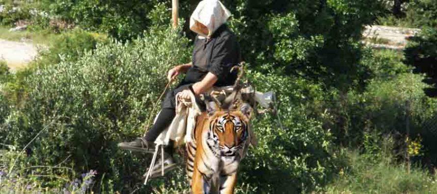 FORA PLUS – Tovar je ustvari pravi tigar