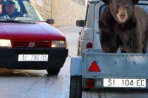 FORA PLUS – Pravilna vožnja medvjeda