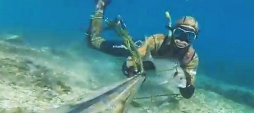 VIDEO – ŠD Lignja u lovu na bokune