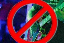 Zabranjena živa glazba na primoštenskim štekatima