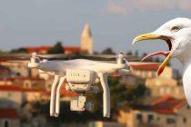 Primoštenski galebovi u napadu na drona :)