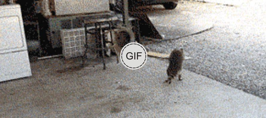 Teke za nasmijati se … lopov u akciji