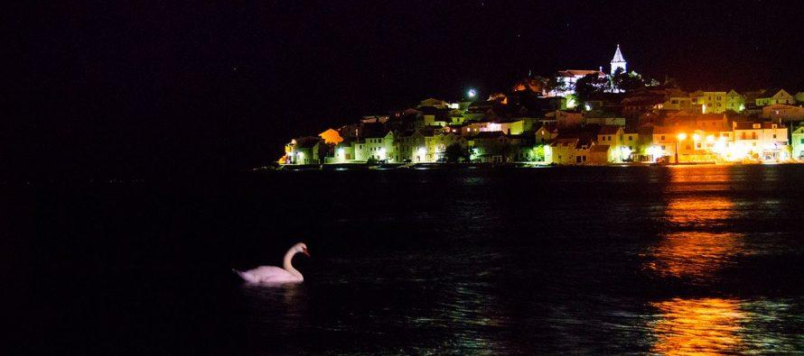 FOTO: Bijeli labud gušta u noćnom plivanju dok Primošten spava