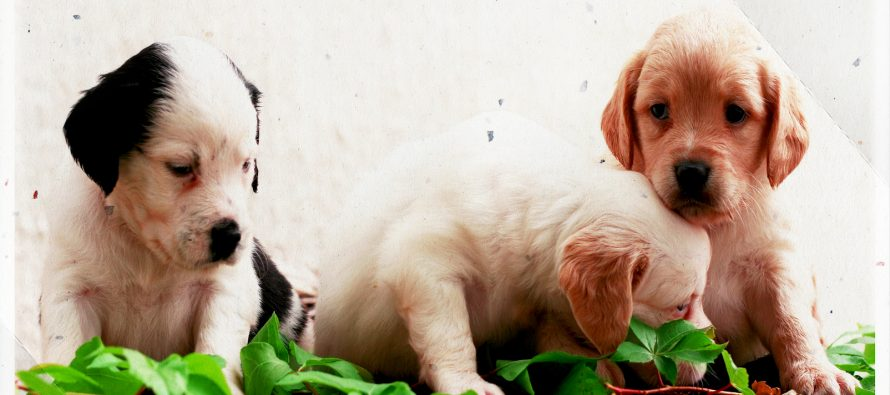 OPREZ: Dva psa primoštenske novinarke Sandre Bolanče otrovala su se dok ih je vodila u istrčavanje po brdu Gaj