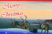 FORA PLUS – Božična