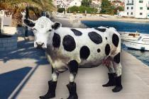 Prvi  lipnja – Svjetski dan mlijeka