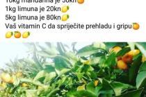 Neretvanske mandarine i limuni u Primoštenu